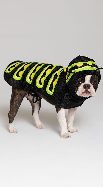 Caterpillar Dog Costume by California Costumes
