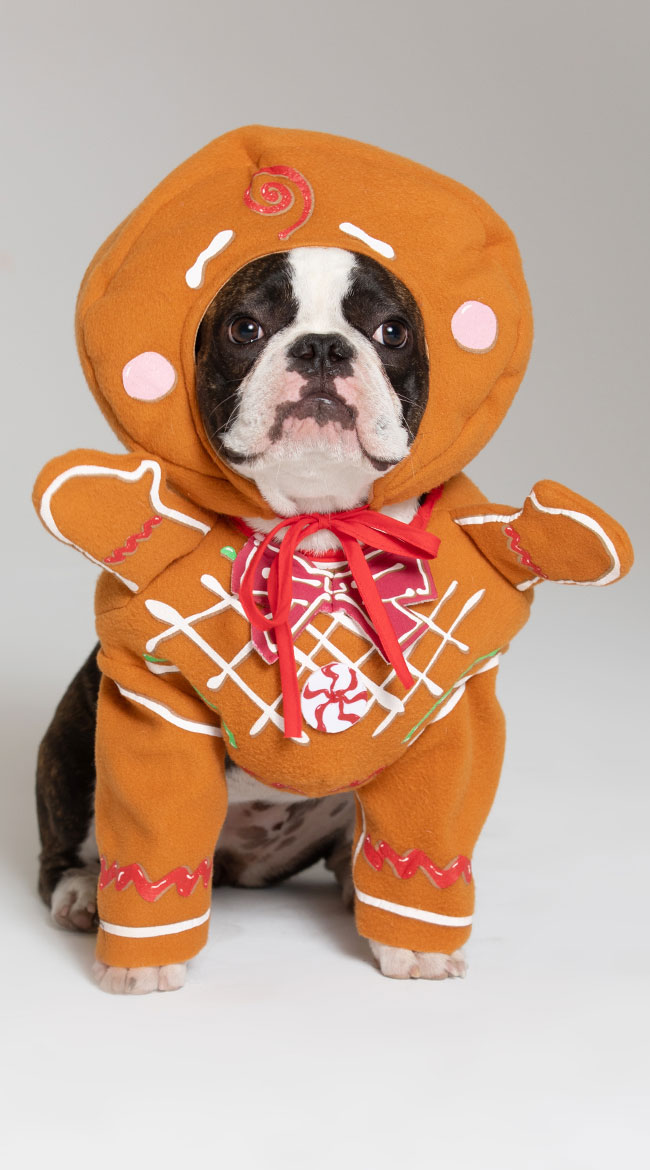 Gingerbread Pawson Dog Costume by California Costumes