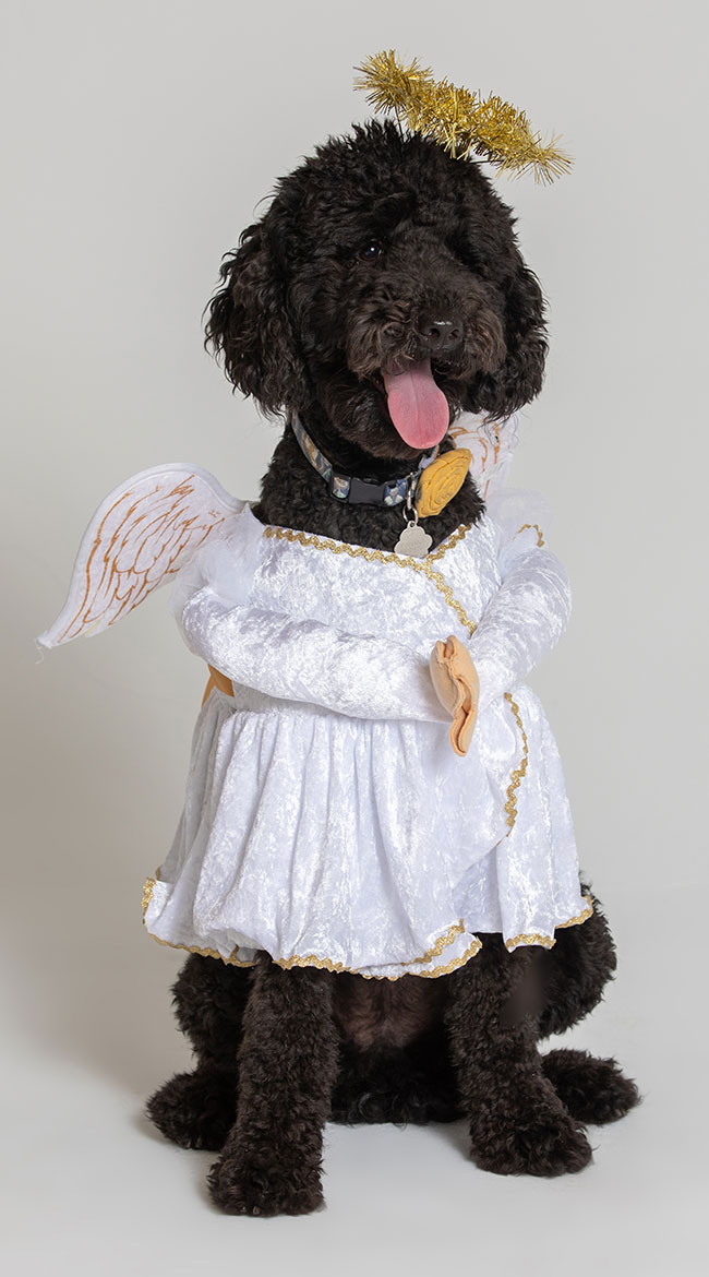 Heavenly Hound Dog Costume by California Costumes