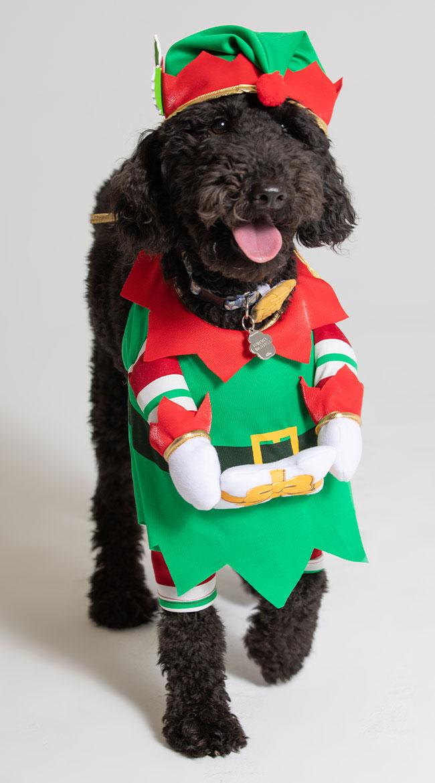 Jingle Elf Dog Costume by California Costumes