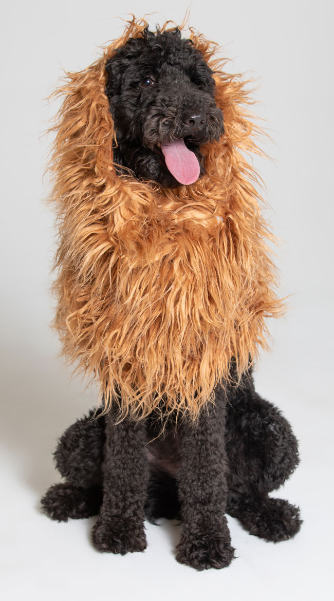 Large Dog Lion Mane Costume by Pet Krewe - sexy lingerie