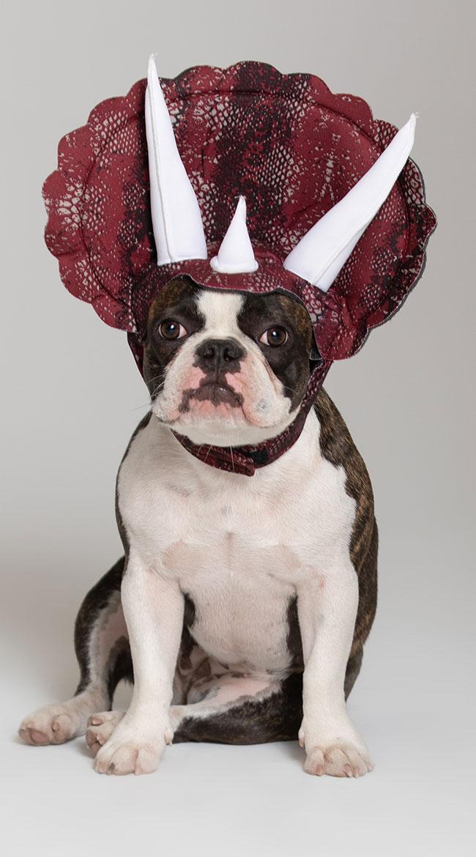 Triceradog Costume by California Costumes